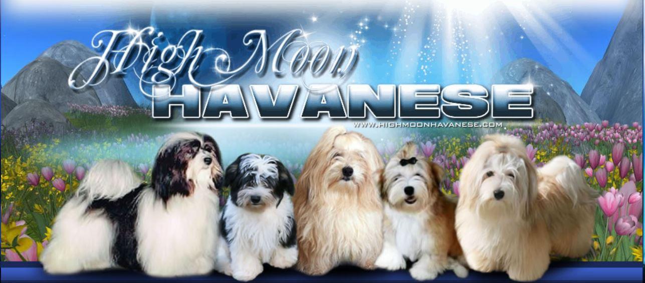 Highmoon Havanese